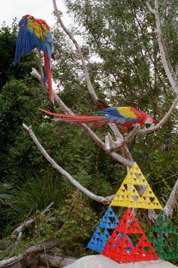 Real image of stage-4 sierpinski tetrahedron against Scarlett Macaws at Phoenix Zoo.
