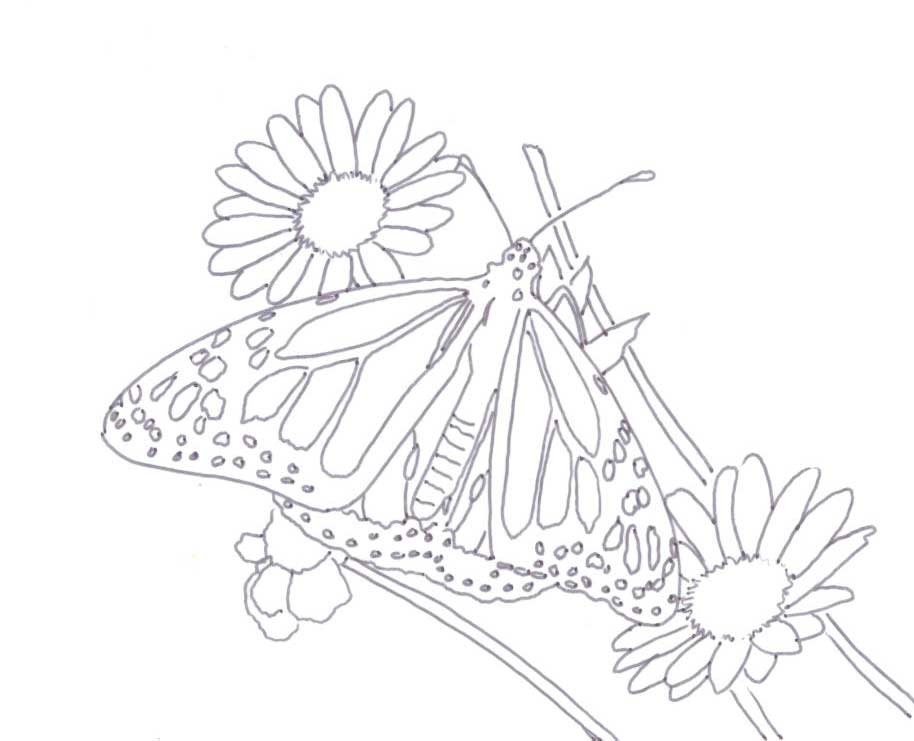 Butterflies Coloring Images from